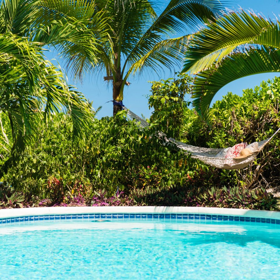 Hotels Trip Ideas tree water Pool palm swimming pool Resort caribbean arecales plant tropics swimming Villa backyard Jungle blue surrounded