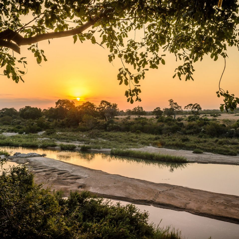 Hotels Safaris tree water habitat Nature River atmospheric phenomenon Sunset natural environment morning sunrise dawn evening woody plant dusk landscape sunlight Lake flower savanna plant setting shore