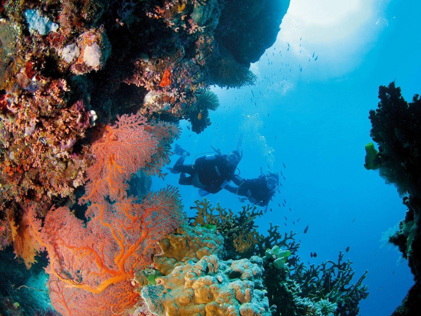 Trip Ideas tree coral reef reef marine biology underwater coral biology Ocean Sea coral reef fish swimming surrounded Forest ocean floor