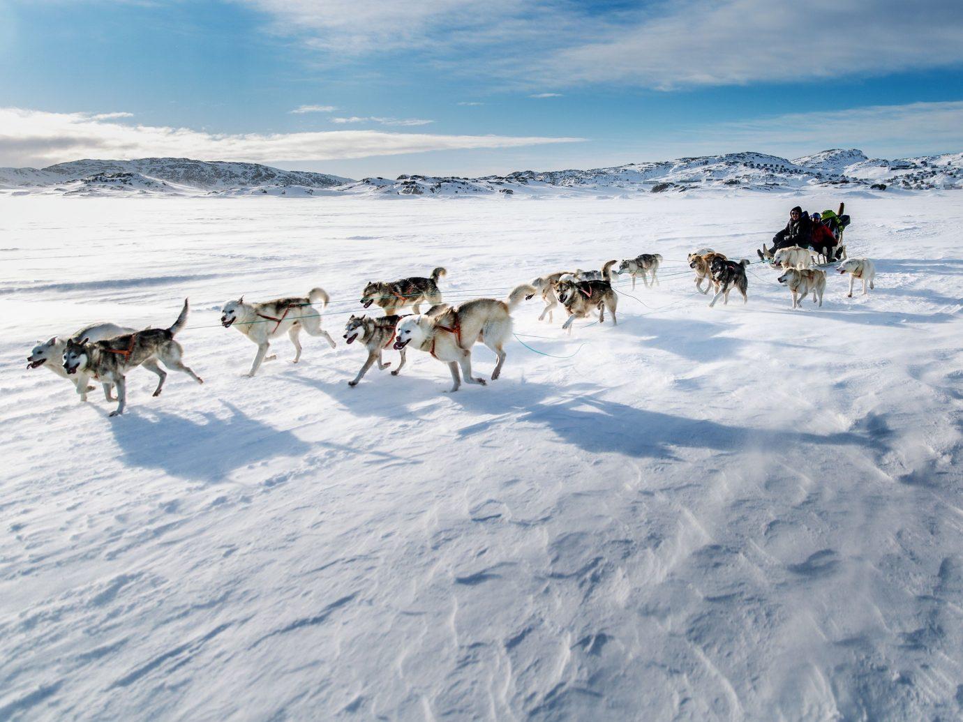 Trip Ideas sky outdoor snow mushing transport dog sled vehicle Winter Dog weather sled season arctic sled dog racing group dog like mammal sled dog