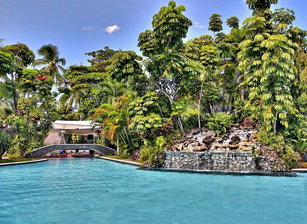 tree water swimming pool Resort Lagoon tropics Island arecales Jungle caribbean Sea surrounded