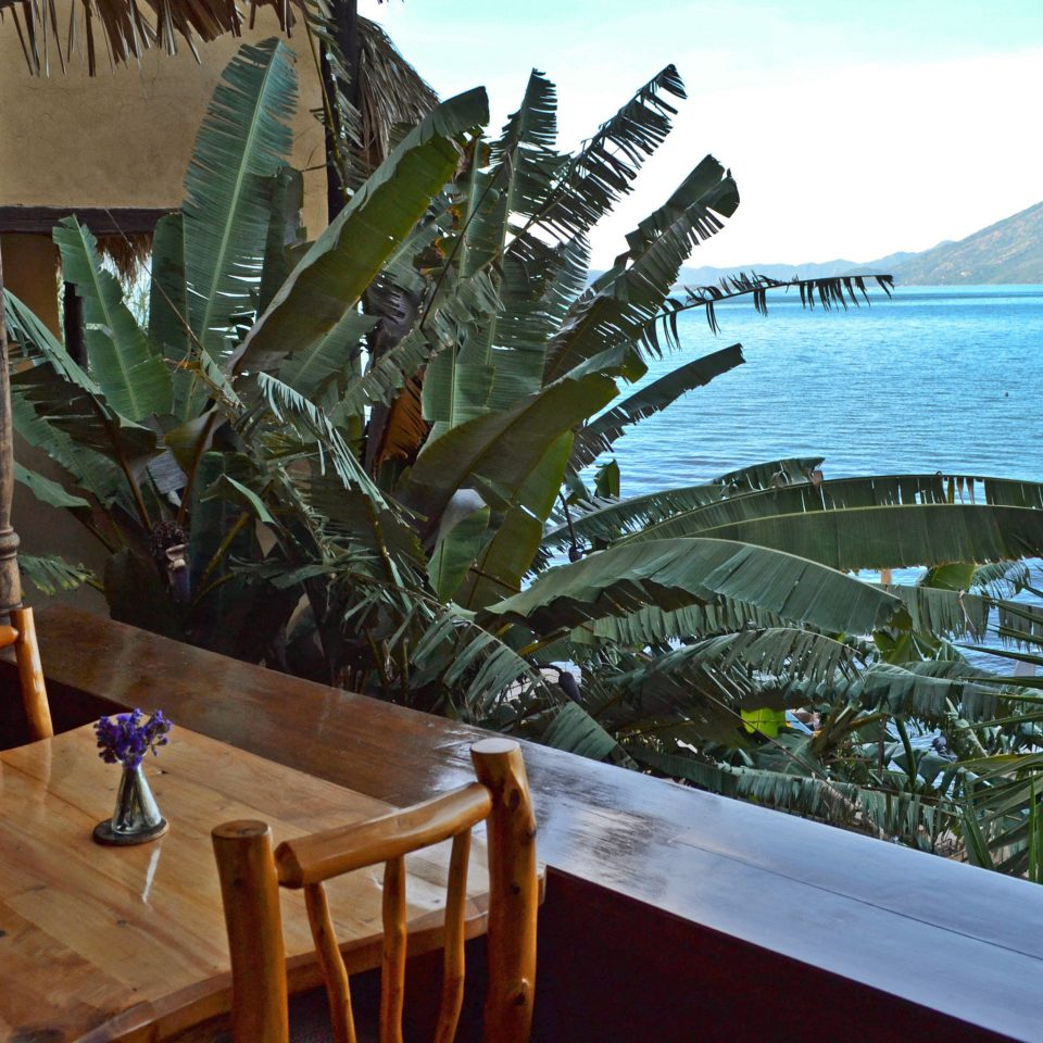 Island Jungle Ocean Scenic views Sea dinosaur Resort arecales caribbean plant