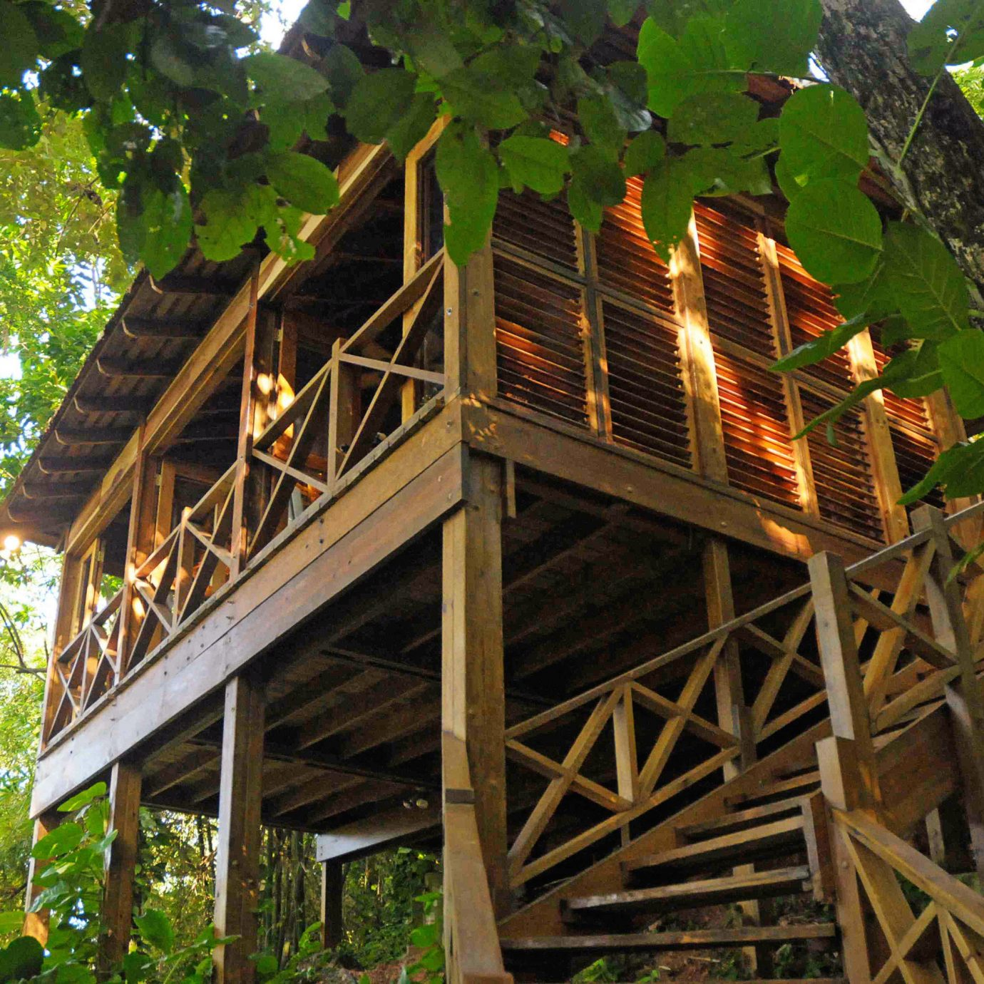 Island Jungle Treehouse tree tree house outdoor structure agriculture backyard log cabin cottage hut rainforest