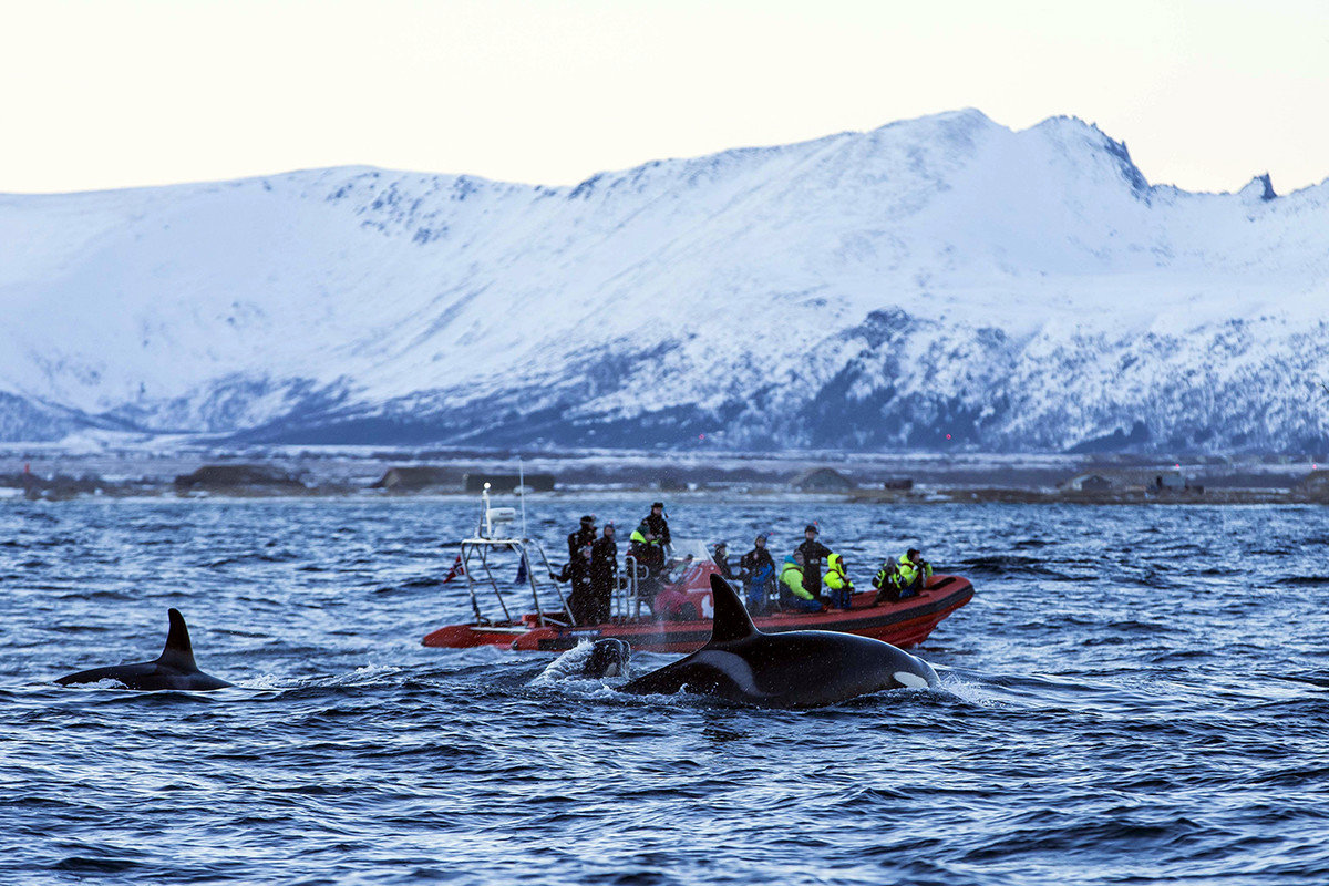 Norway Oslo Trip Ideas water transportation water Sea Boat mountain Ocean Lake boats and boating equipment and supplies arctic sky glacial landform loch watercraft rowing boating whales dolphins and porpoises tourism vacation marine mammal