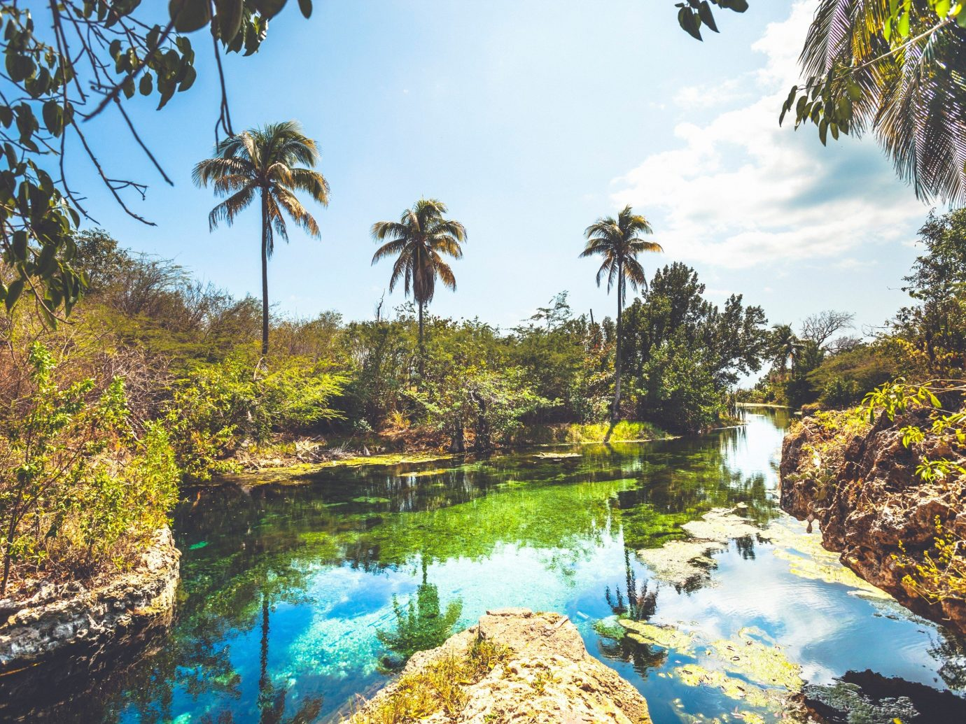 Trip Ideas tree outdoor Nature vegetation body of water water ecosystem arecales palm Jungle plant surrounded bushes pond Garden