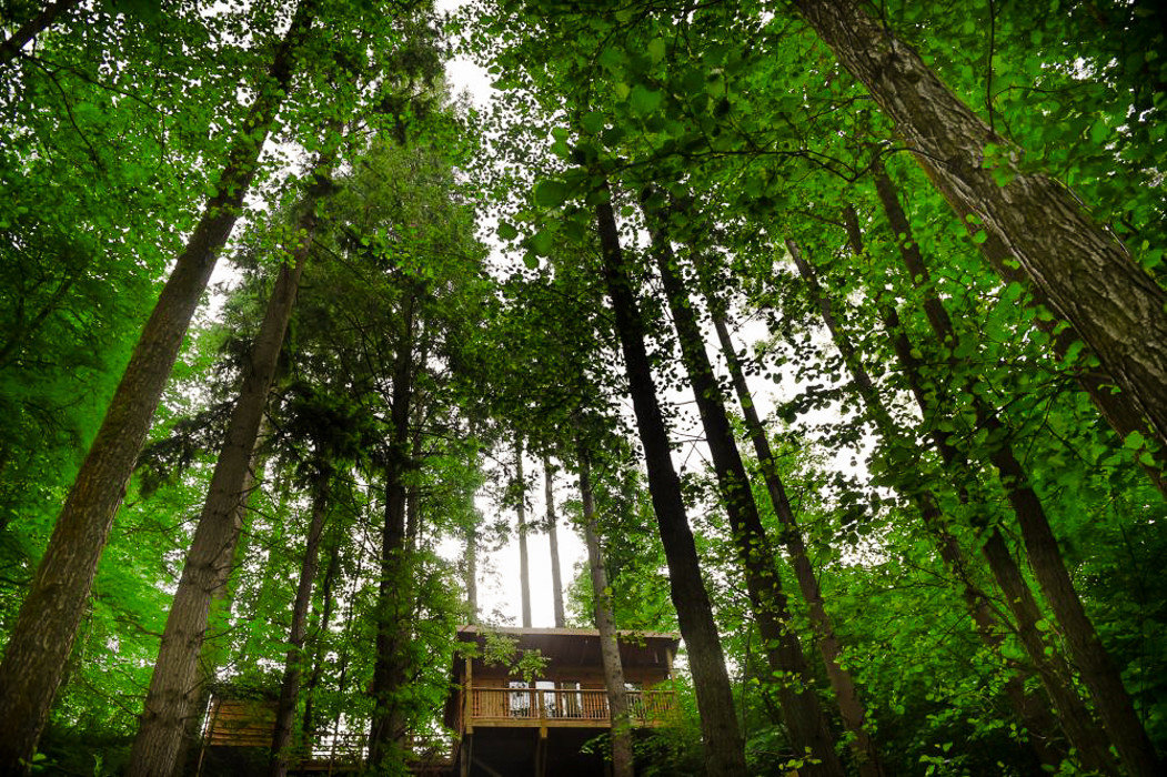 Glamping Outdoors + Adventure Trip Ideas tree outdoor green Nature vegetation woodland plant Forest ecosystem nature reserve leaf grove old growth forest Jungle rainforest biome sunlight branch grass temperate broadleaf and mixed forest wood temperate coniferous forest wooded area
