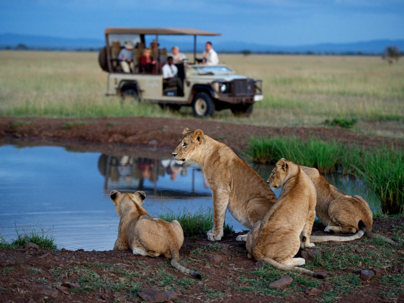 Singita Serengeti House, Tanzania - Lions in Africa