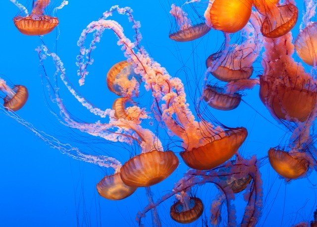 animal invertebrate Jellyfish marine biology cnidaria marine invertebrates coral reef coral reef fish biology organism coelenterate coral illustration underwater blue different colorful colored arranged