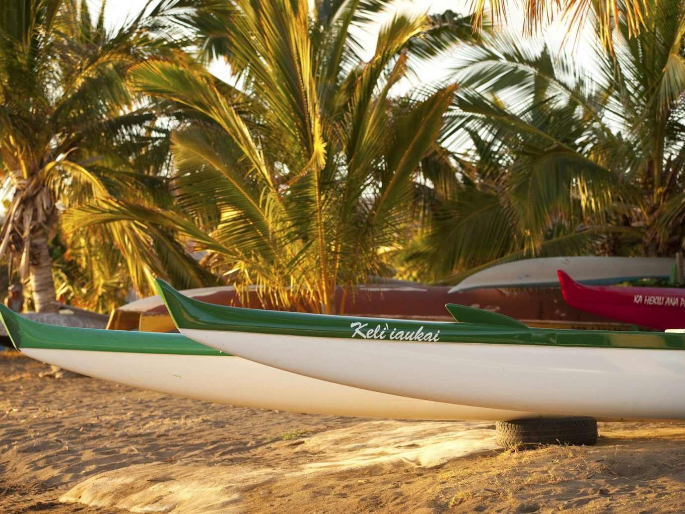 Trip Ideas tree ground outdoor green plane Boat palm vehicle boating vacation Beach plant Sea watercraft sailing vessel sandy Forest land