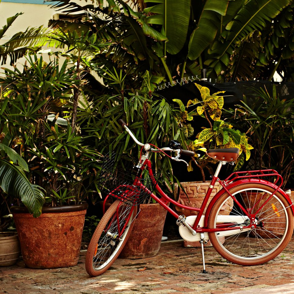 tree bicycle ground parked red plant vehicle flower Jungle arecales stone curb
