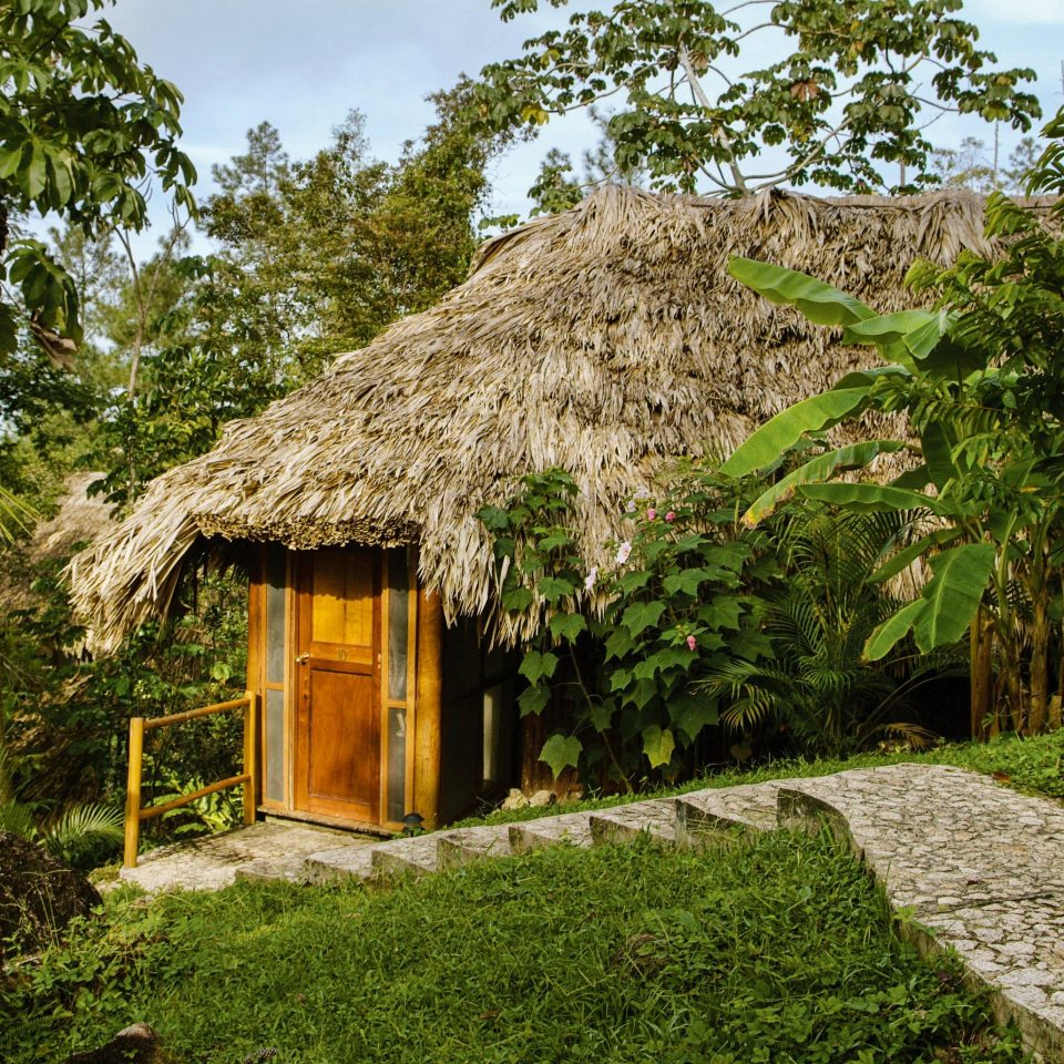 vegetation hut cottage arecales tree palm tree house Jungle thatching plant outdoor structure grass