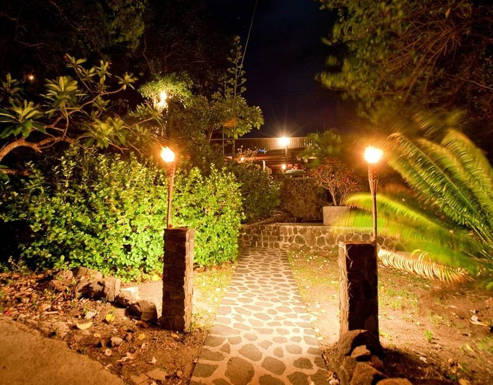 tree night landscape lighting light lighting sunlight Jungle flower surrounded
