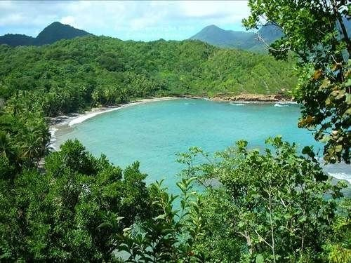 tree Nature nature reserve vegetation ecosystem mountain reservoir Lake Jungle Lagoon rainforest surrounded shore