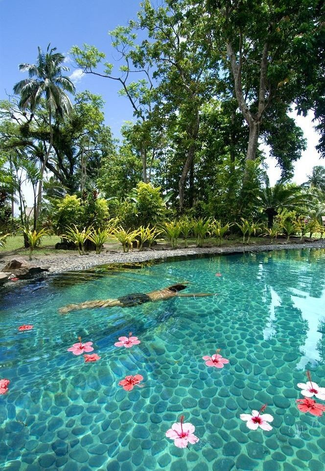 tree water swimming pool leisure Resort Lagoon Lake Jungle colorful lined surrounded swimming day colored
