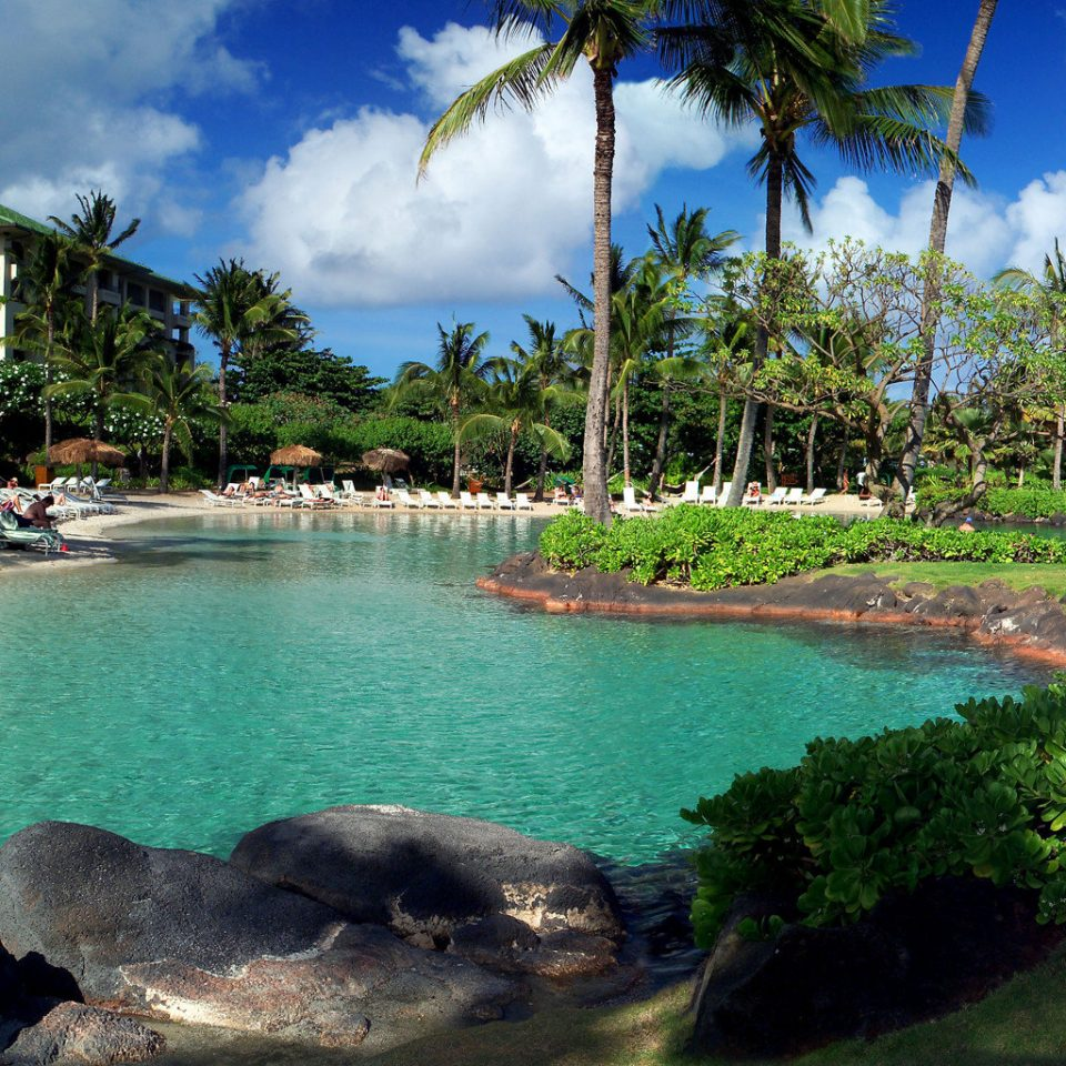 Ocean Play Pool Resort tree water Nature Lagoon Sea caribbean tropics Jungle swimming pool reef palm plant pond