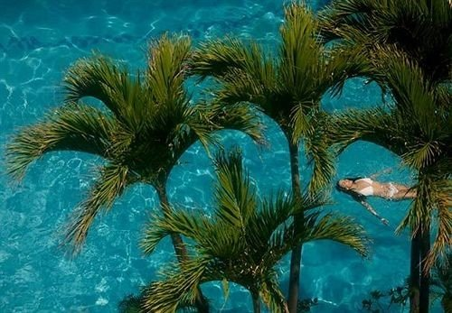 water palm plant marine biology tree underwater coral reef arecales palm family reef Ocean coral Jungle tropics branch ocean floor