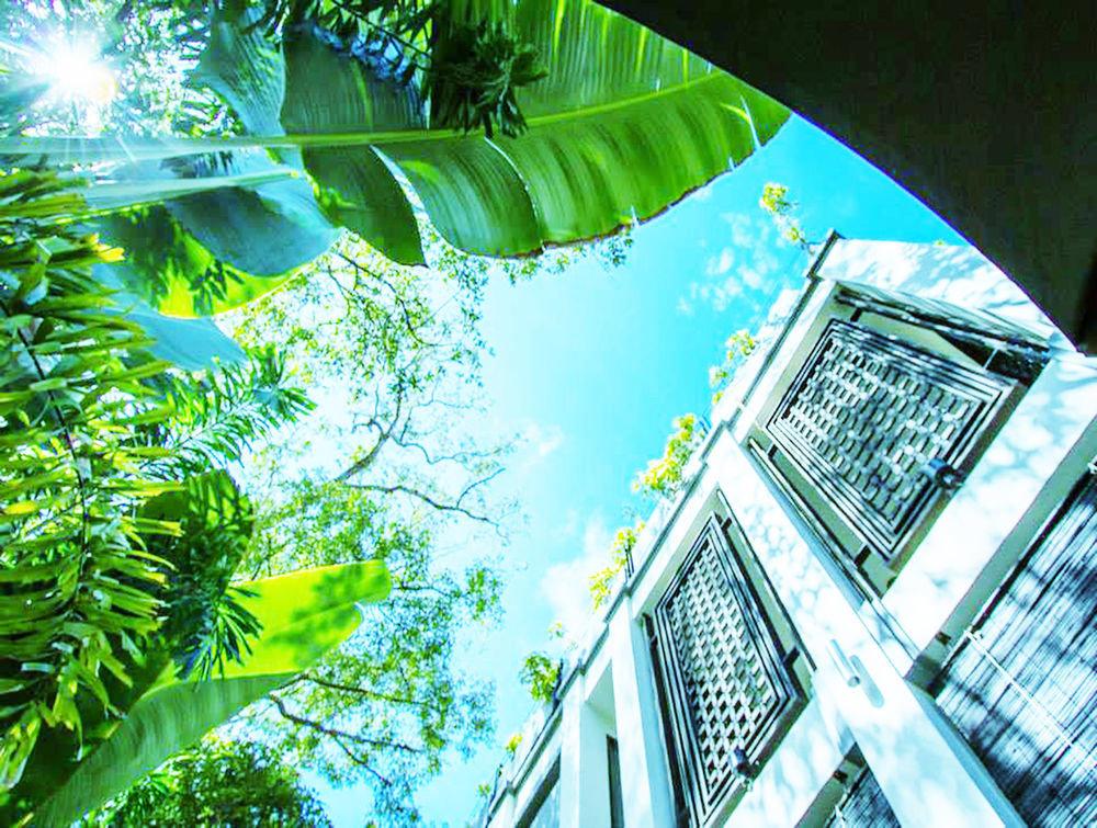 sunlight screenshot Jungle plant