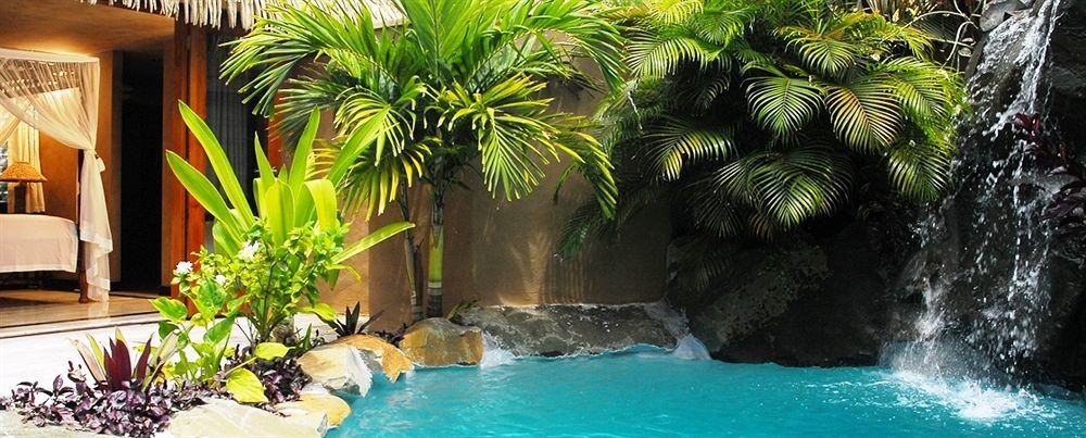 plant swimming pool palm Resort tree Pool backyard arecales Jungle