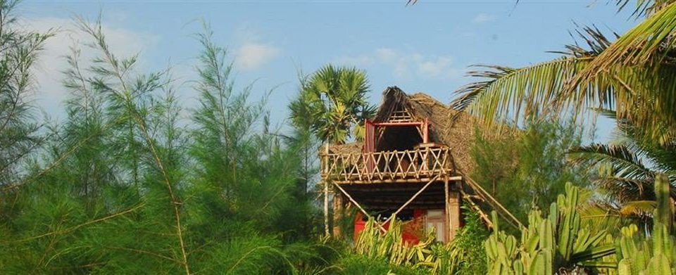 tree sky palm agriculture plant Jungle hut Resort lush