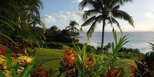 tree palm plant vegetation caribbean Jungle Resort arecales tropics rainforest palm family flower plantation