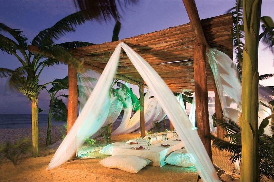 Resort arecales tropics plant caribbean Jungle tree palm