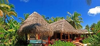 tree Resort ecosystem hut Jungle arecales plant