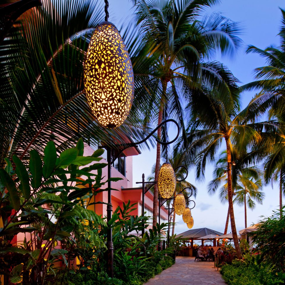 tree palm plant Resort arecales tropics palm family flower Jungle restaurant lined shade