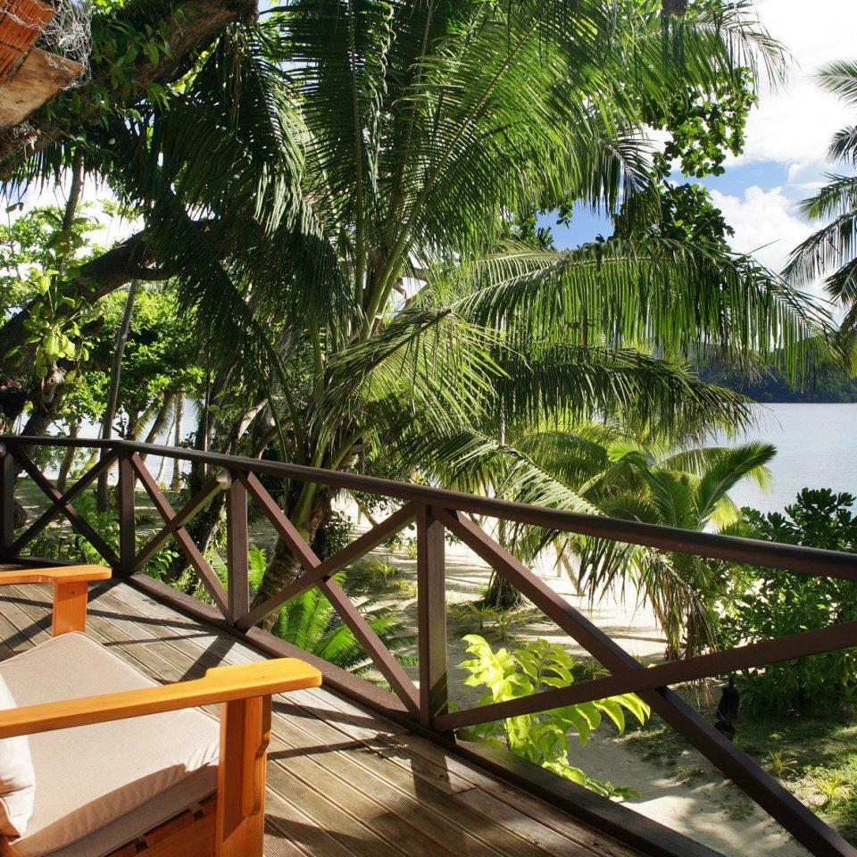 tree Resort arecales tropics Jungle flower palm plant
