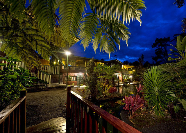 tree palm Resort night arecales plant tropics Jungle flower restaurant landscape lighting lined