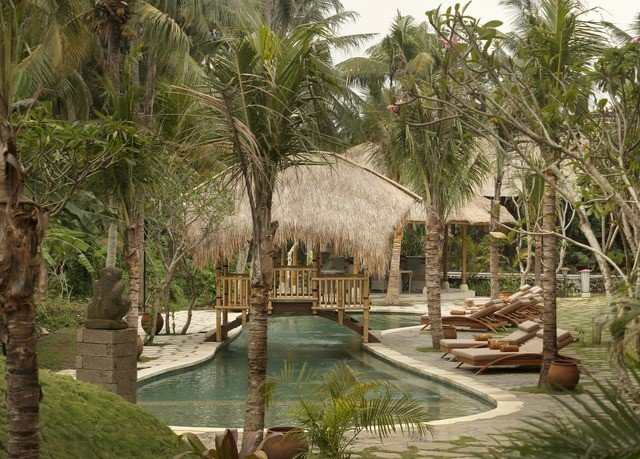 tree palm plant Resort swimming pool arecales Jungle