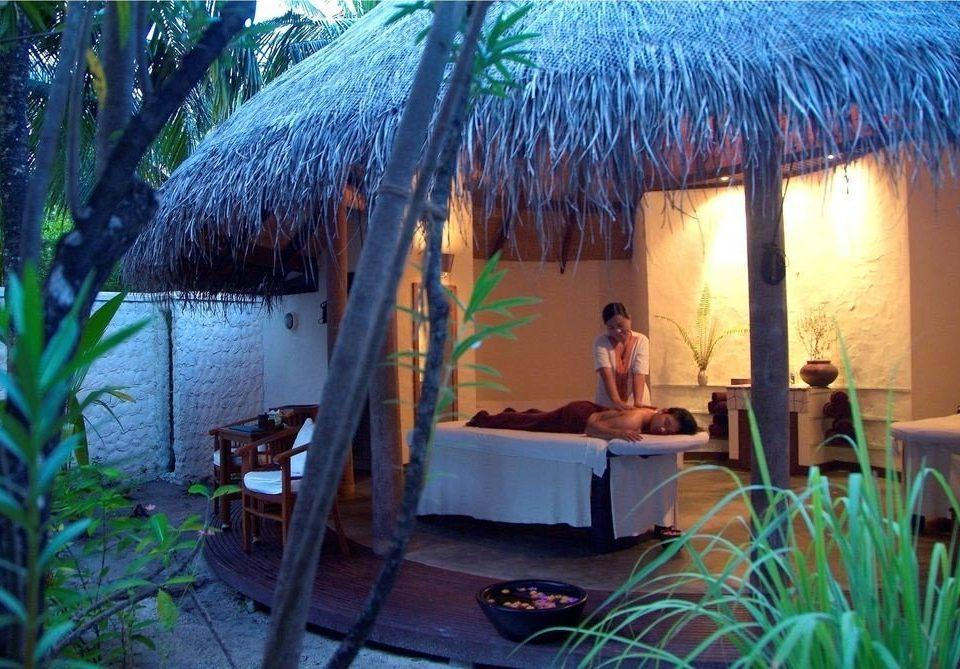 Resort backyard Jungle