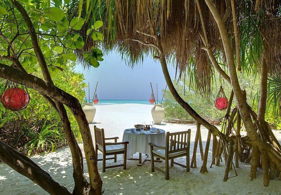 tree water leisure plant Resort tropics Jungle restaurant