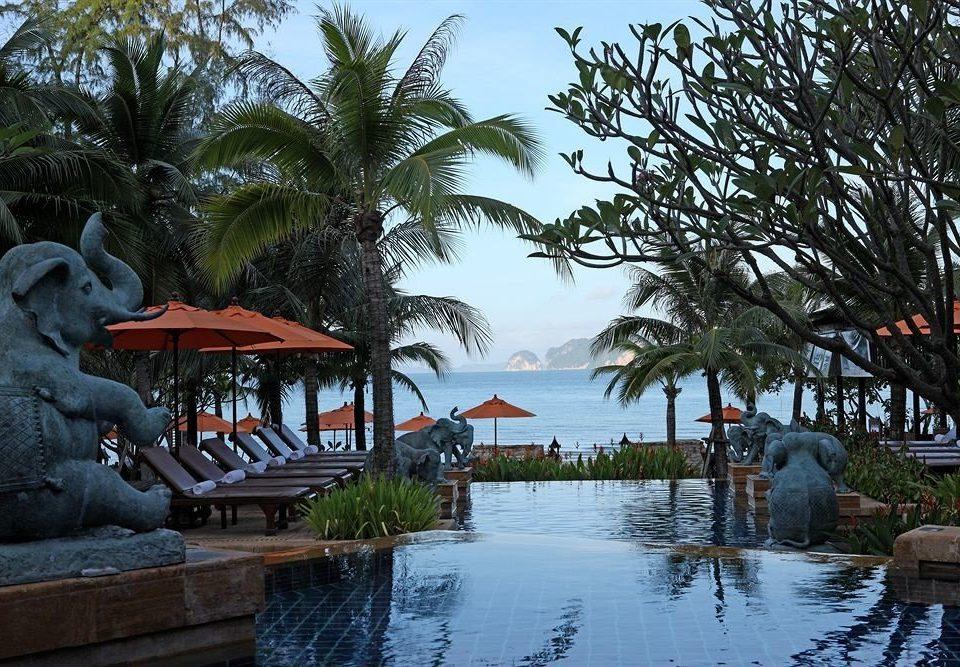 tree Resort plant Sea tropics arecales Jungle palm
