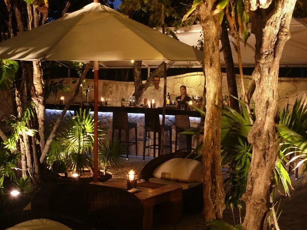 tree Resort restaurant Jungle arecales Villa plant shade