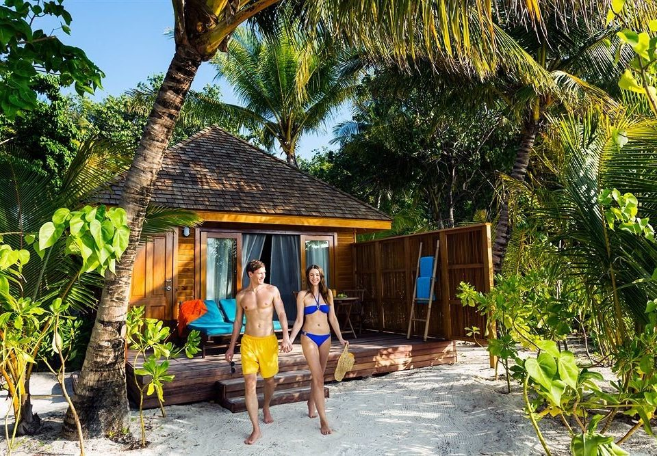 tree ground Resort building Jungle hut Village cottage eco hotel tropics