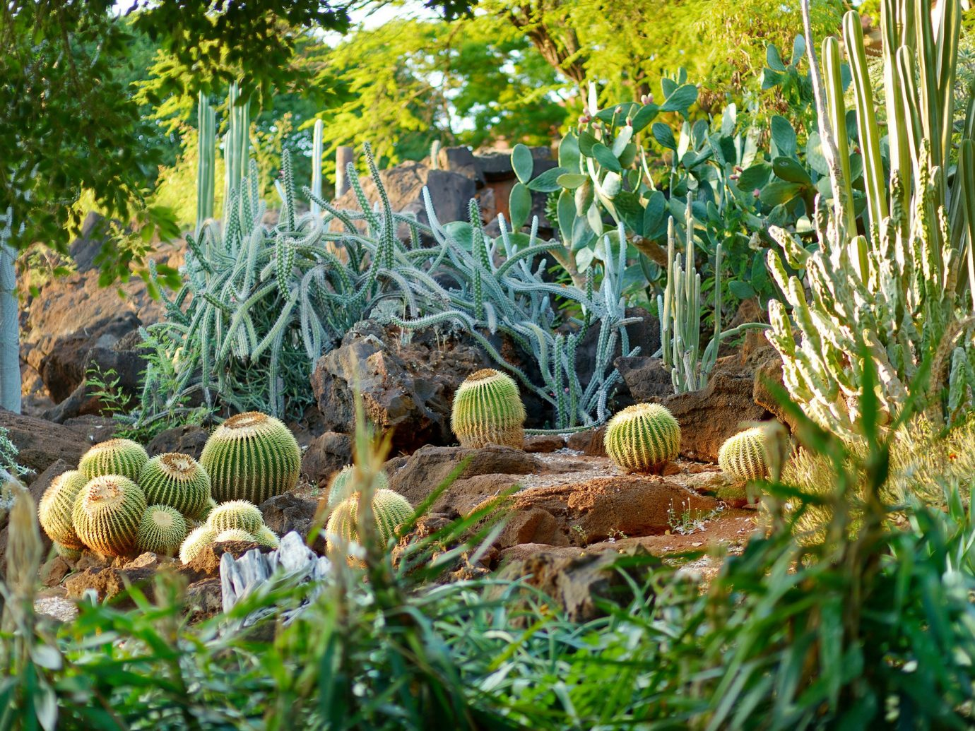 Cacti at the Moorten Botanical Garden