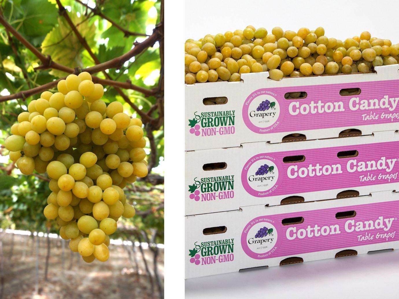 Food + Drink food fruit plant produce land plant flowering plant flower corn