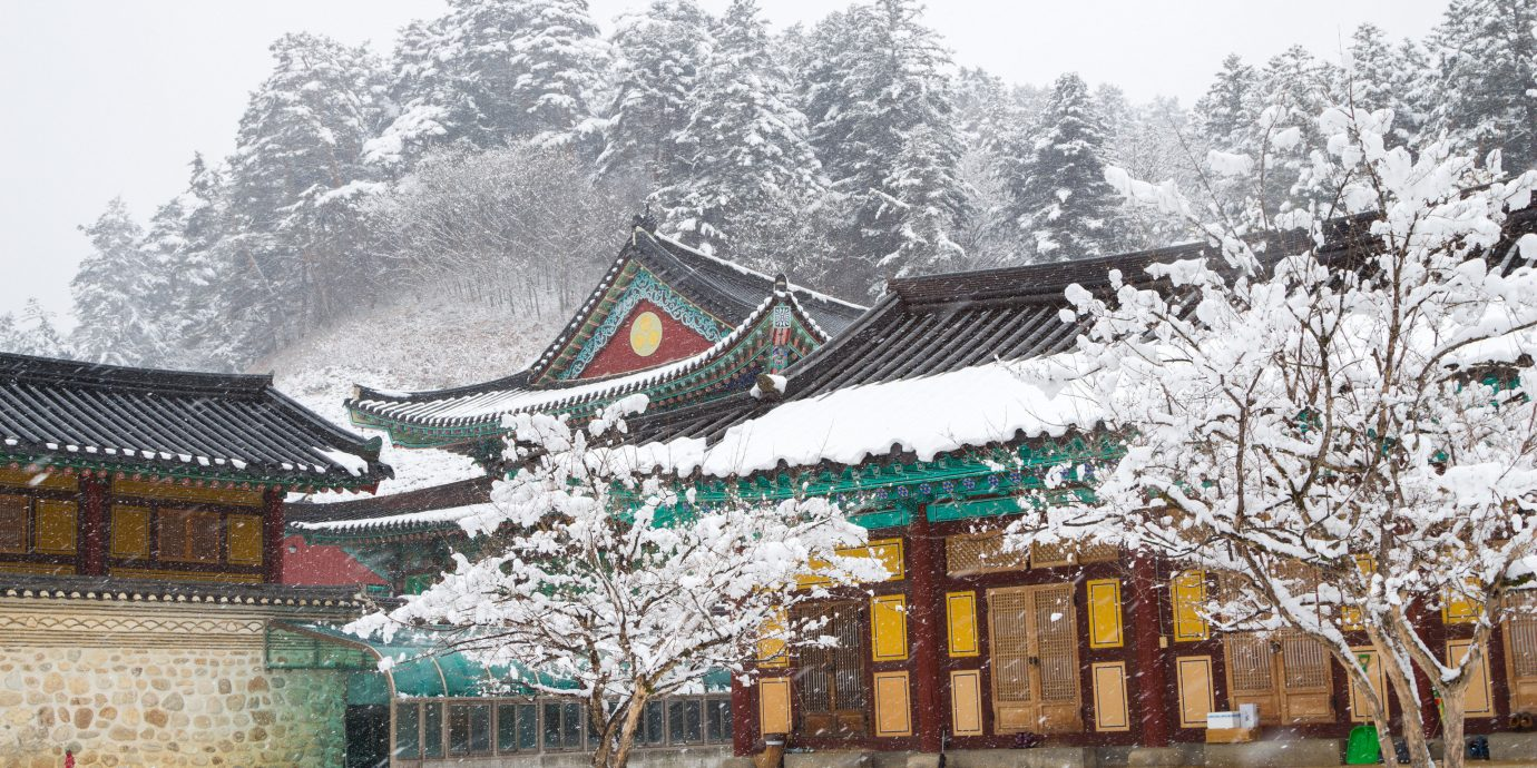City Seoul Trip Ideas snow Winter tree freezing plant house tourist attraction shrine branch building temple