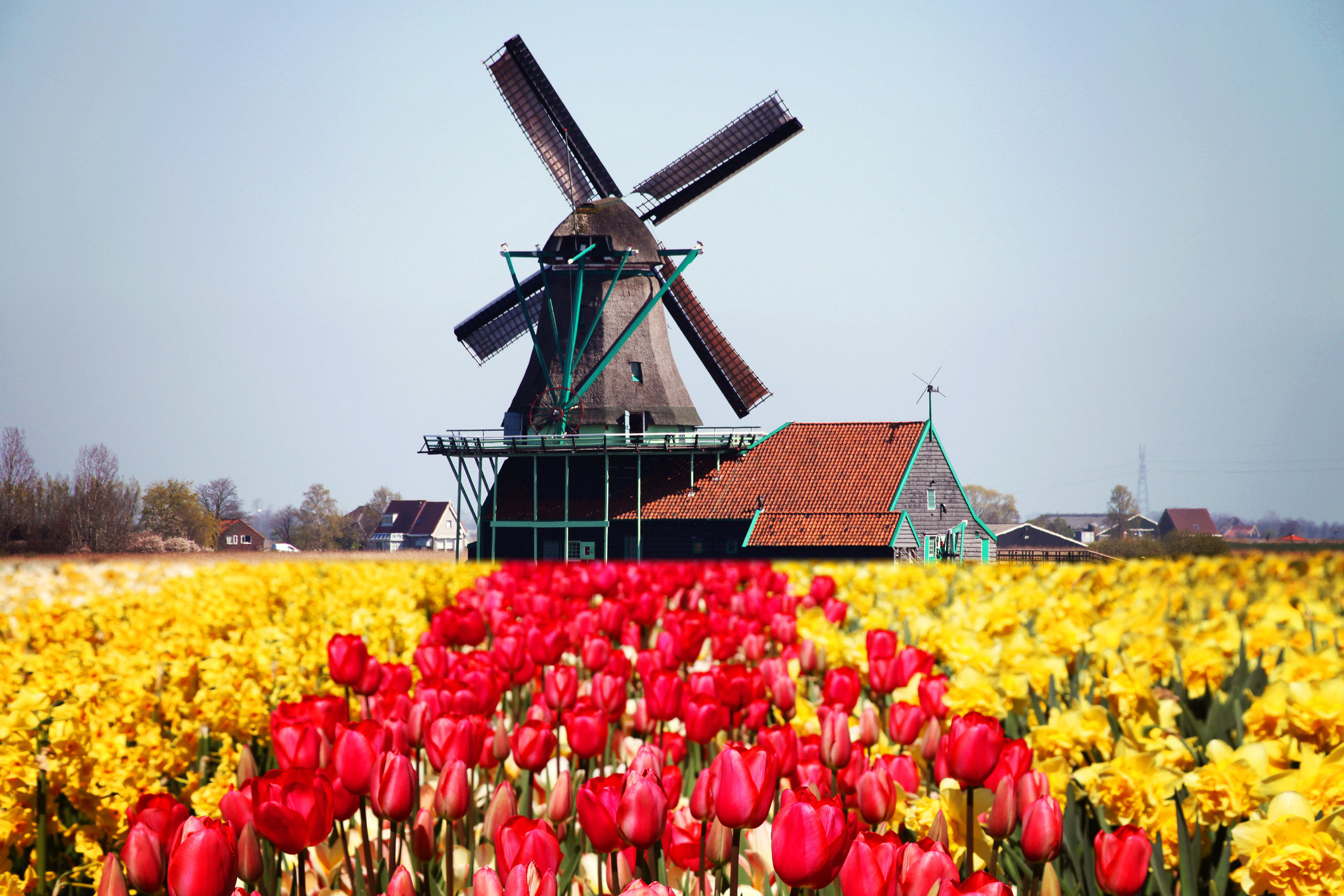 Trip Ideas sky outdoor flower plant land plant flowering plant field outdoor object windmill tulip day