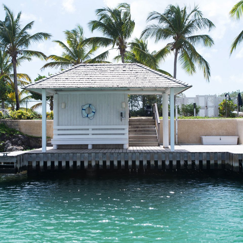 tree water swimming pool Resort Pool arecales Villa palm Lagoon palace tropics