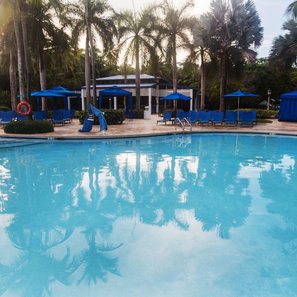 tree swimming pool leisure Resort blue Water park resort town backyard Lagoon amusement park