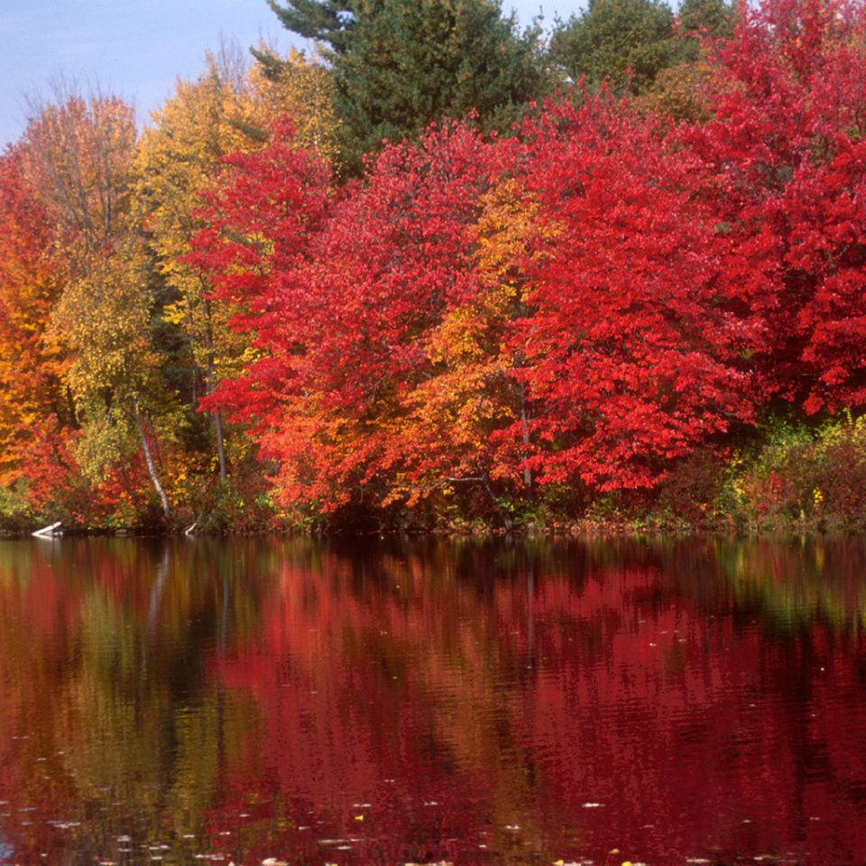 Lake Natural wonders Nature Outdoors Waterfront tree water sky River autumn plant season leaf flower woody plant land plant maple tree flowering plant pond surrounded wooded