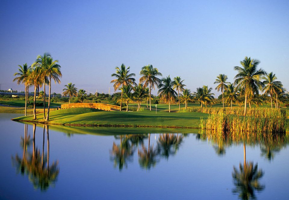 water sky tree Nature Lake structure plant sport venue grass arecales River palm family golf course flower tropics palm paddy field surrounded