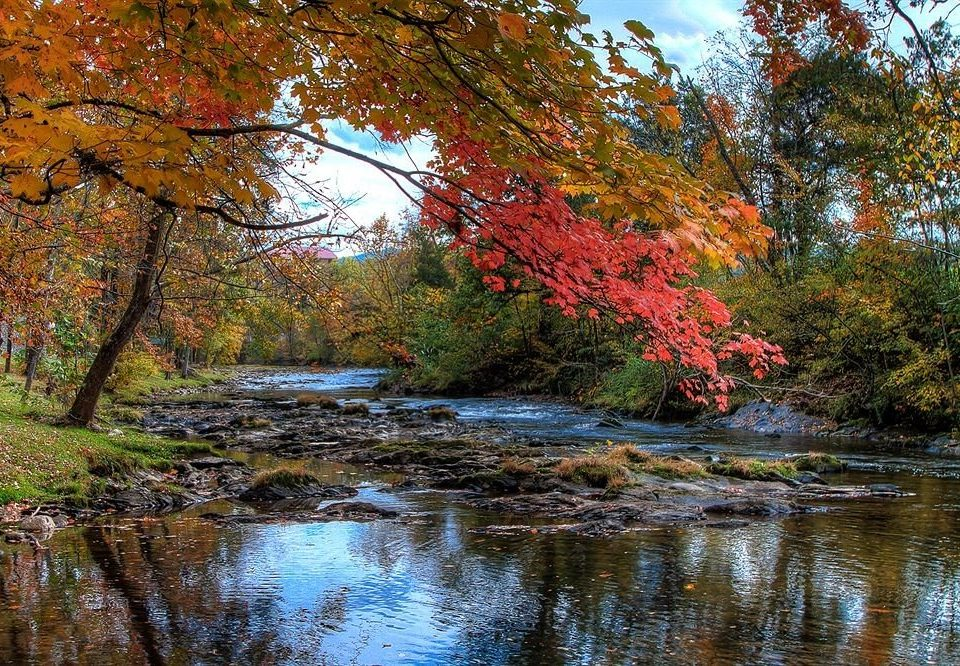 tree Nature water River autumn Lake creek season leaf stream plant woody plant woodland pond landscape flower surrounded wooded