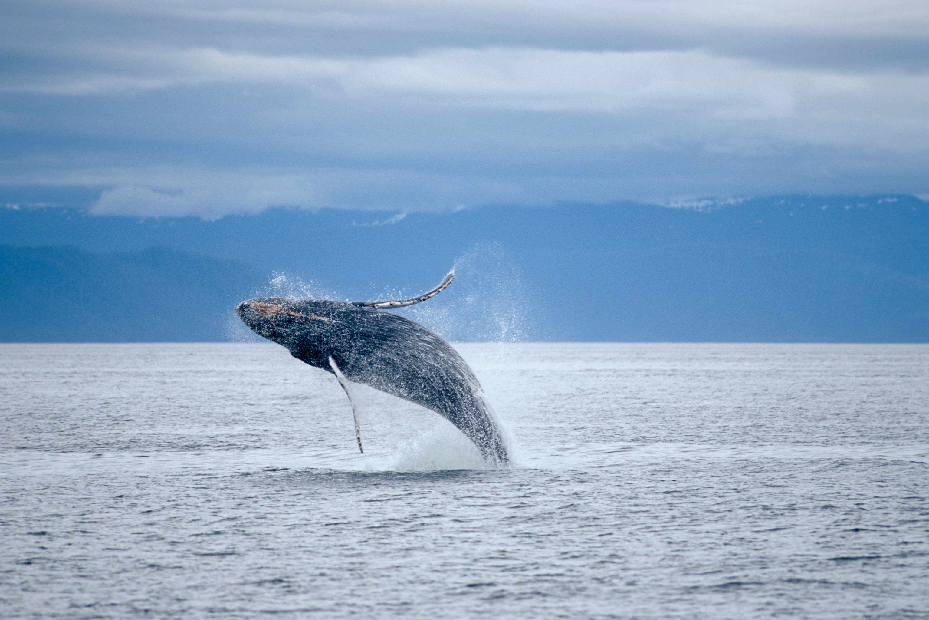 water sky aquatic mammal animal whale mammal vertebrate marine mammal whales dolphins and porpoises marine biology Ocean humpback whale mountain Sea Lake grey whale wind wave wave dolphin day