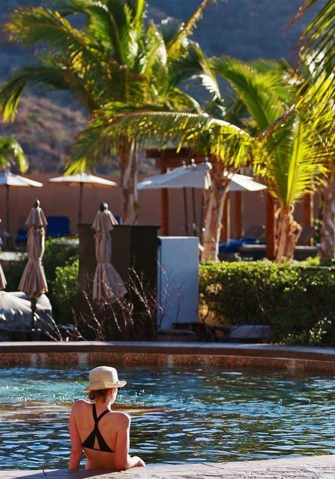 water tree leisure swimming pool Resort caribbean Lake Water park tropics arecales