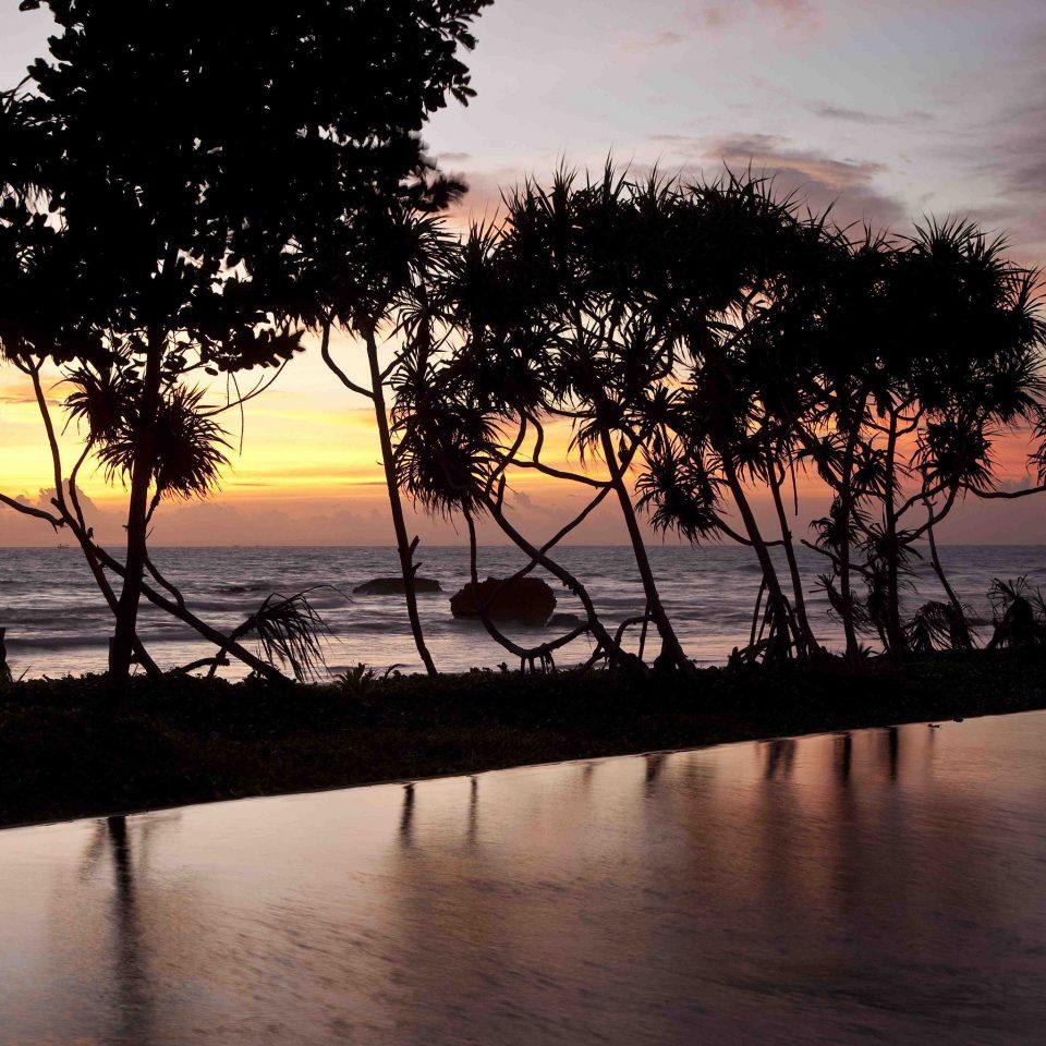 water sky tree River Sunset sunrise dawn horizon dusk morning evening cloud arecales sunlight Sea Lake plant shore