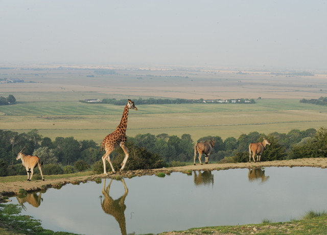 water grass sky mountain habitat animal atmospheric phenomenon plain natural environment fauna grassland ecosystem Wildlife mammal Lake savanna prairie giraffe rural area Safari landscape giraffidae steppe wetland drinking marsh pond