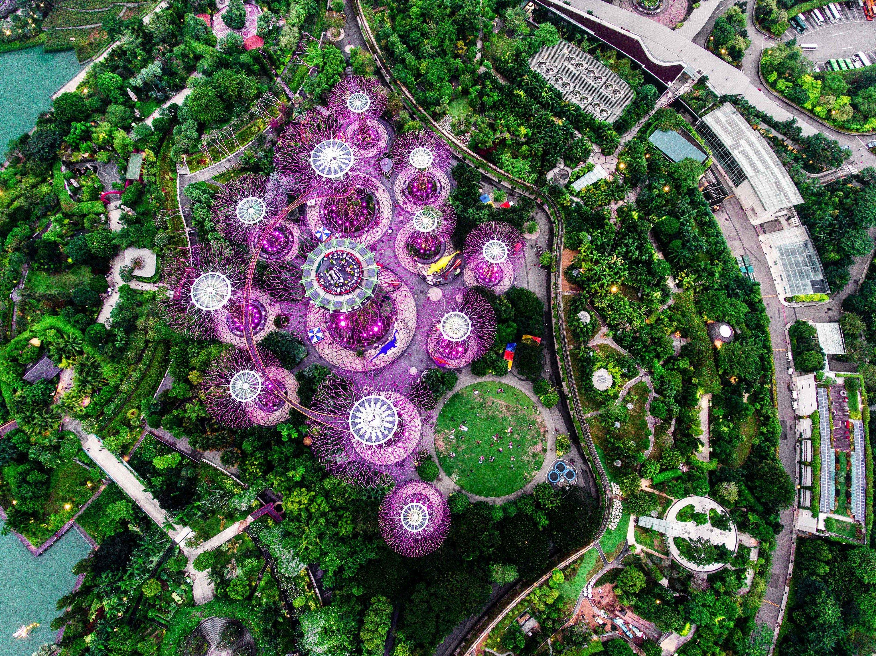 Offbeat Singapore Trip Ideas purple plant flora tree flower Garden