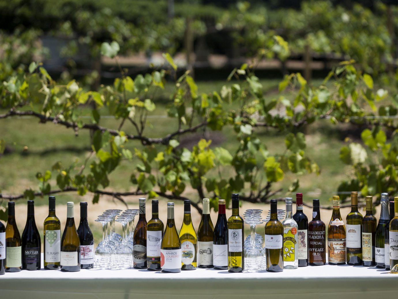 Food + Drink bottle wine flower several